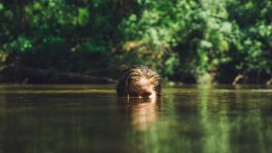 Augen über der Wasseroberfläche